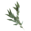 arome Eucalyptus